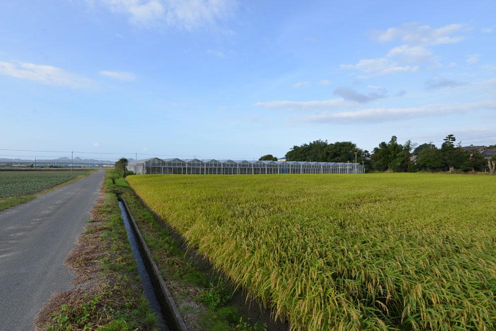 糸島ガラスハウス
